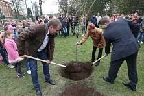 Zástupci města Lunzenau zasadili v Libochovicích na důkaz přátelství sakuru.