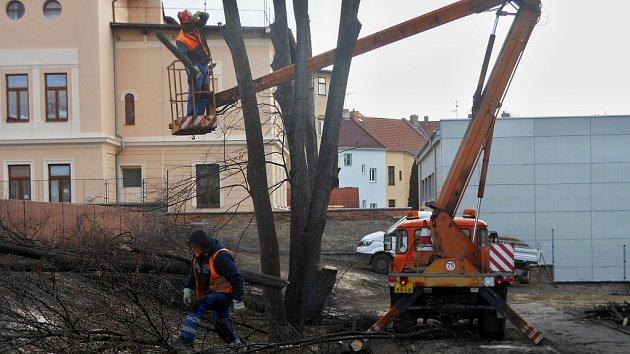 Kácení stromů u školky v Litoměřicích