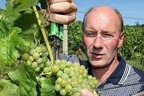 ZATÍM MÁ 15°. Antonín Hrabkovský mladší kontroluje cukernatost na zkušebním vzorku moštu z odrůdy Müller Thurgau na vinici u Žalhostic. S výrobou burčáku zde ještě počkají. Zahájí ji nejspíše osmého září.