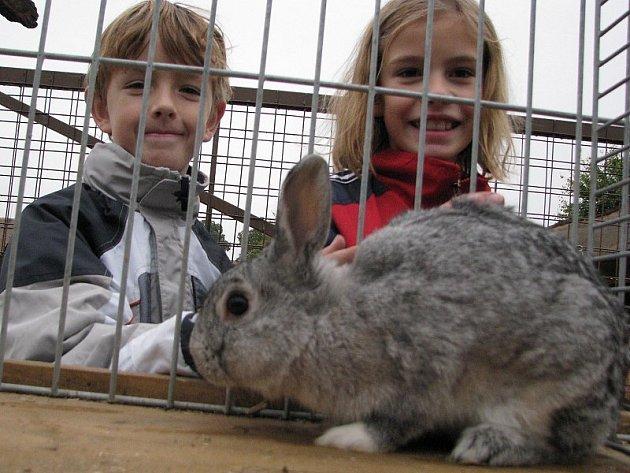 """KRÁLÍK. Zvířata měla mezi dětmi jednoznačně největší úspěch. Na snímku jsou při prohlídce """"vesnické zoo"""" Lukáš Košťál a Kateřina Lišková, oba ze Základní školy ve Mšeném – lázních."""