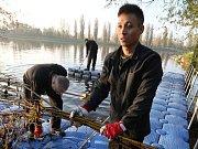 Odsouzení vězni z litoměřické vazební věznice pracují na úklidu břehů řeky Labe.