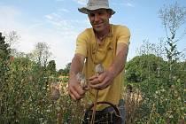 OD FARMÁŘE Karla Tachecího převezmou produkci máku prodejny biopotravin.