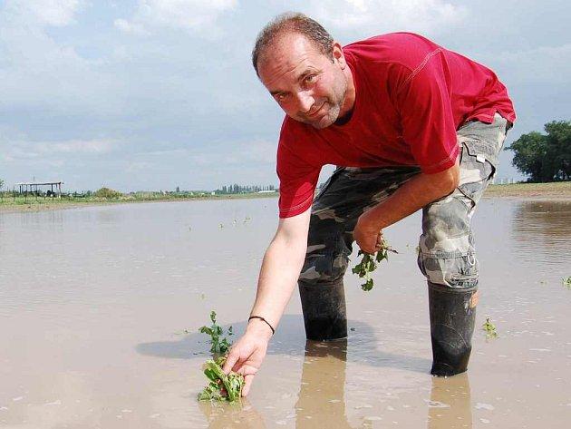 Technik rostlinné výroby Agrokomplexu Ohře Jan Jenčík ukazuje rostliny cukrovky, které při sobotním silném dešti potloukly kroupy a  následně se na pozemku u Nových Kopist, kde  cukrovka rostla, vytvořila obrovská laguna.