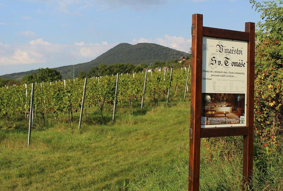 Vinice v Malých Žernosekách, které patří k Vinařství svatého Tomáše.