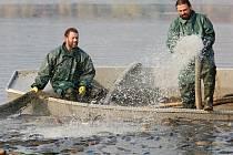 Výlov Chmelaře dokeští rybáři v Úštěku podnikají tradičně v listopadu. Podle radnice na jezeře nehospodaří správně.