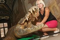 """LIBOCHOVICKÁ POUŤ ZAŽIJE NEVÍDANOU PODÍVANOU.  Zámecká """"saň"""", tedy trofej Josefa Herbersteina v podobě krokodýla,  totiž oslaví svých sto let."""