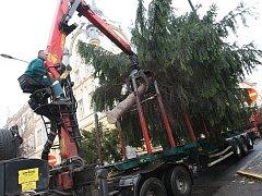 Převoz vánočního stromu v Litoměřicích
