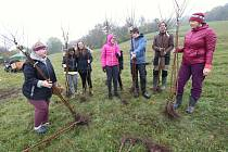 V Tluční vysazovali místní obyvatelé a brigádníci ovocný sad z původních druhů jabloní a dalších ovocných dřevin.