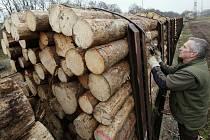 Pracovníci lesní správy Litoměřice Lesů ČR připravují transport několika desítek vagónů naložených kalamitním dřevem na cestu ke zpracovateli