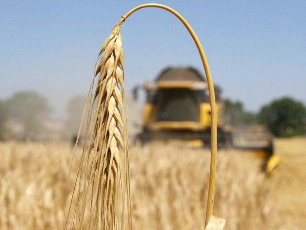 Ozimý ječmen je už téměř sklizen, z polí už mizí i ozimá pšenice