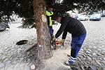 Na litoměřické náměstí dorazil v pondělí 23. listopadu dopoledne vánoční strom