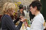 Vinařské Litoměřice, pátek 17.4.2015
