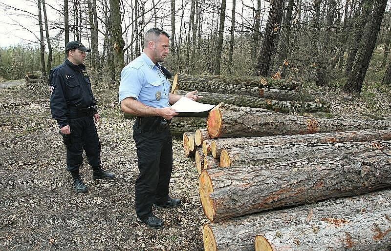 KONTROLA VYTĚŽENÉHO DŘEVA. Smíšené hlídky policistů z lovosického obvodního oddělení a třebenického městského policisty kontrolují složené kmeny v depu dřeva u Sutomi. Právě v těchto místech bylo dříve odcizeno již vytěžené dřevo.