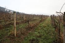 Vinohrady ve Velkých Žernosekách