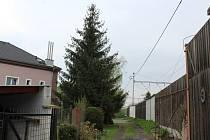 Smrk ztepilý stojí v Lovosické ulici Karla Maličkého v těsné blízkosti trati.