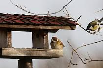 Sčítání ptactva na Litoměřicku