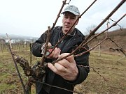 Vinaři otevřou své sklepy i v Žalhosticích (viz foto).