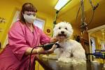 Od pondělí 20. dubna se otevřely psí salony