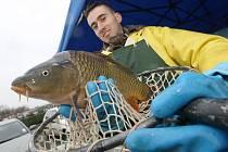V Litoměřicích začal vánoční prodej ryb