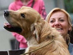 Mezinárodní soutěž psů na výstavišti Zahrada Čech v Litoměřicích