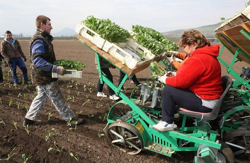 Zemědělci na Litoměřicku mají obavy, že nebudou mít na jarní práce a asi ani na sklizeň brigádníky