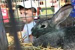 Tradiční výstava drobného zvířectva v Žitenicích, kterou pořádá Český svaz chovatelů.