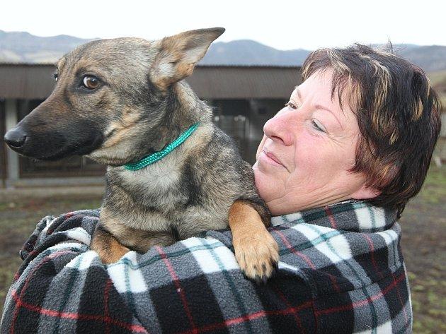 V PSÍM DOMOVĚ V ŘEPNICI mají v současné době 48 psů. Po Vánocích nepřibyli, zato po silvestru útulek přijal 14 psů.