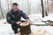 Třebenický strážník Tomáš Rotbauer zjišťuje a dokumentuje nové škody v lesích u obce Sutom na Třebenicku.