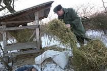 Myslivci v Chodovlicích v mrazech přilepšují zvířatům.
