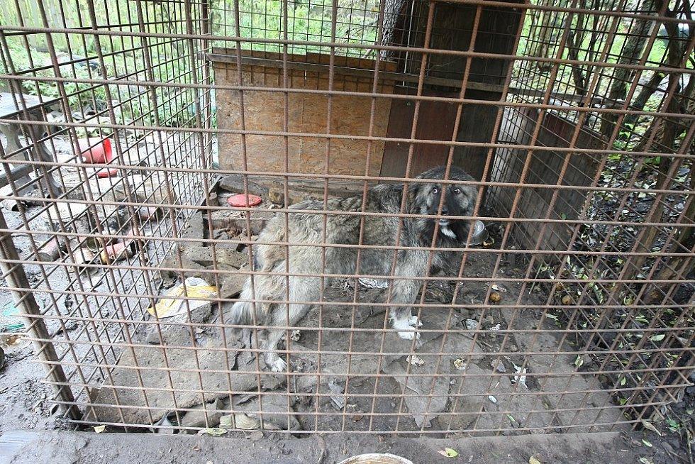 Týrání psů.