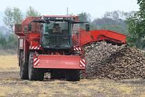 ŘEPA CUKROVKA. Na polích mají zemědělci připravené tisíce tun. Skladováním plodina ztrácí na kvalitě. Kdy si ji cukrovar odebere, zatím nevědí.