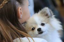 Krajská výstava psů na výstavišti v Litoměřicích