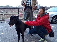Tento pes pobíhal po Terezíně