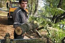 PŘÍPRAVA STAVBY.  Ve čtvrtek a v pátek zajišťují pracovníci Povodí Labe odstranění několika škodlivých náletových dřevin na břehu Mlýnského ramene tak, aby bylo možné zahájit stavby samotného přístaviště.