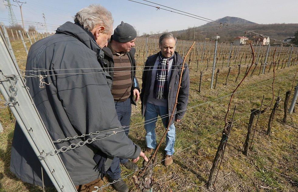 František Kupsa provedl komisi po vinici i sklepě