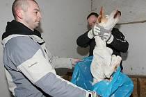 Týrání psů ve Vchynicích.
