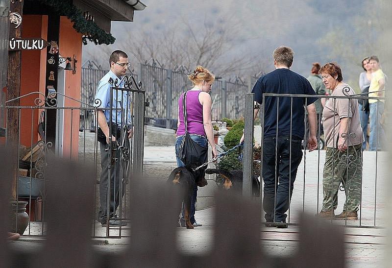 Pes po převozu do řepnického psího domova