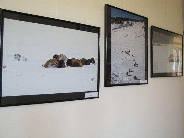 Fotograf ze Štětí vystavuje v nemocnici snímky zvířat