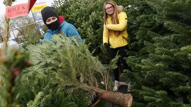 Prodej vánočních stromků u Kauflandu v Litoměřicích