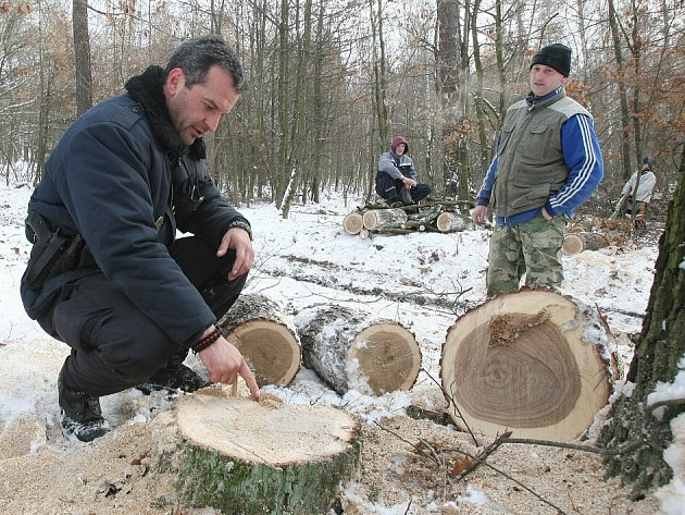 Kontroly v lese pod Košťálovem