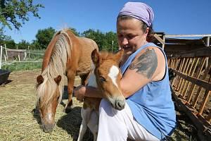 Chovatelce koní z Ústí nad Labem, která má zahradu v Litoměřicích, ukradl někdo před týdnem malé hříbě.