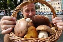 Houbař Jaroslav Holeček z Lovosic přinesl z Úštěcka košík plný hub