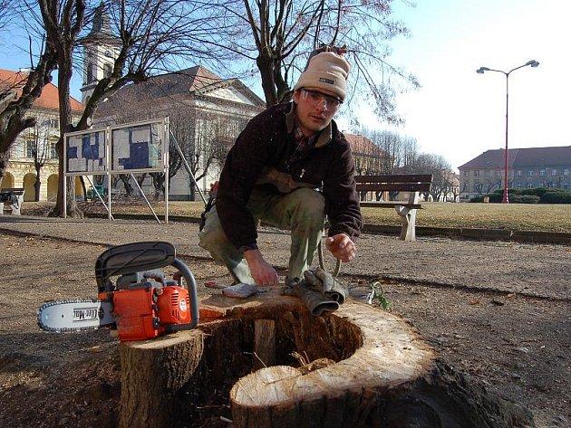 Větve na terezínském náměstí odřezával Miroslav Buldra.