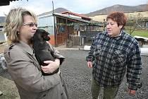 Po silvestrovských oslavách bylo na Litoměřicku nalezeno celkem čtrnáct zaběhnutých psů. Někteří z nich čekají na své pány v psím útulku v Řepnici.