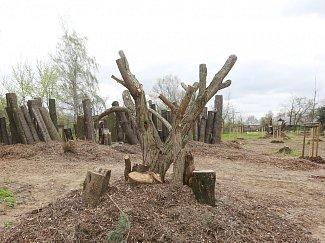 V lovosickém lesoparku Osmička vzniklo broukoviště