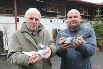 Chovatelé závodních a okrasných holubů otec a syn Jelínkovi z Těchobuzic na Litoměřicku.