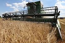 V regionu začala sklizeň obilí