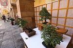Výstava bonsají na zámku v Libochovicích