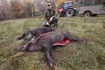 V sobotu proběhla naháňka na divoká prasata v honitbě Kamýk. Během dne myslivci skolili v oblasti Miřejovické stráně a Libochovan dvanáct divočáků.