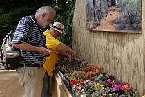 Výstava kaktusů na libochovickém zámku.